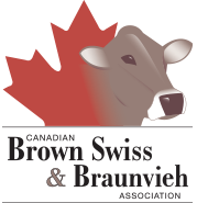Logo Brown Swiss